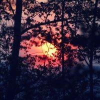 Просто закат.. :: Александр Шимохин