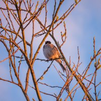 Не знаю, что за птичка, скромно, но гордо распевала песни на закате) :: Николай Зиновьев