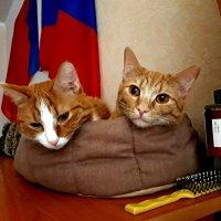 Сказка для Перчика и Беляша :: Дмитрий (Горыныч) Симагин