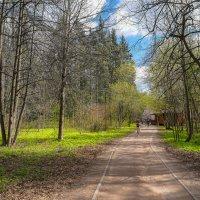 В весеннем парке... :: Владимир Жданов