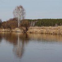 Весна :: tamara kremleva