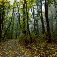 В старом парке туман...... :: Юрий Цыплятников