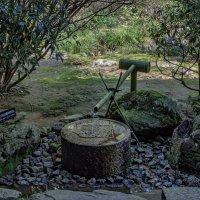 Цукубаи - чаша для сбора воды :: Shapiro Svetlana