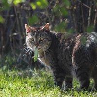 Кот и ящерица :: Наташа С