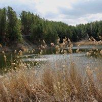 Небольшое озеро на месте бывшего карьера :: tamara kremleva