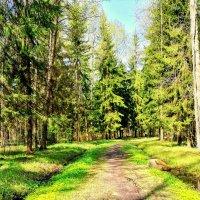 В Павловском парке весной - 4 :: Сергей