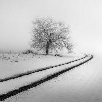 Зимняя графика :: Фёдор. Лашков