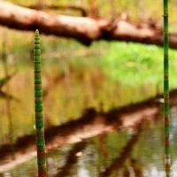 Весна на лесной реке :: Сергей Шаталов