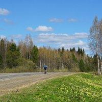 Сквозь цветущую весну :: Галина Кан