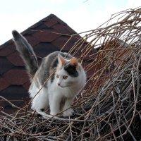 Может тоже свить себе гнездо...) :: tamara kremleva