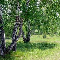 Май :: tamara kremleva