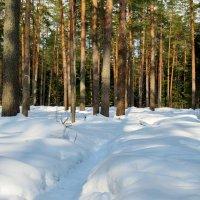 Лес в марте :: Ольга Елисеева
