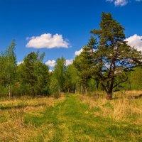 Прогулка по лесу # 02 :: Андрей Дворников