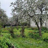 Garden in May :: silvestras gaiziunas gaiziunas