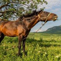 Весёлый конь :: Юрий Глаголистов