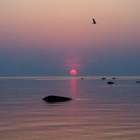 чайка :: Валентина Папилова