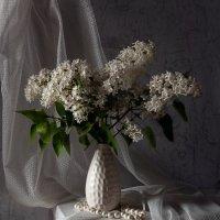 Ах, как прекрасна та сирень, Что за моим окном цветет. :: Татьяна Попова