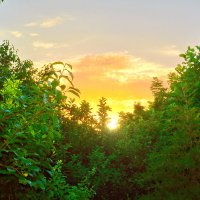 Восход в саду.... :: Юрий Владимирович