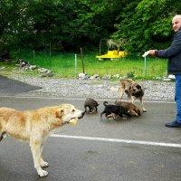 Голодные животные :: Наталья (D.Nat@lia)
