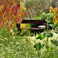 укромное местечко :: Осень
