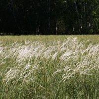 Степная трава. :: сергей