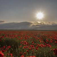 Крым :: Елена Елена