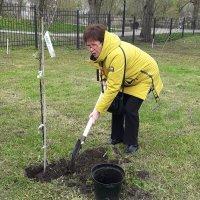 Сама садик я садила, сама буду поливать. :: Сергей Половников