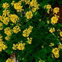 Цветы... :: Михаил