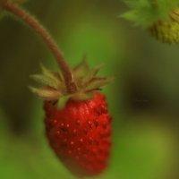 Первая ягода :: Nataliya Belova