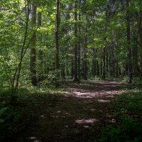 Летний полдень в лесу :: Александр Орлов