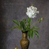 Белый пион :: Лидия Суюрова