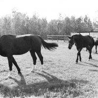 kodak academy horse :: Андрей Богданов АндиСтудия.РФ