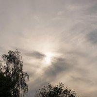 Предзакатное небо. :: сергей