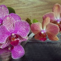 Орхидеи :: Наталья (D.Nat@lia)