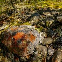 Лишайник на камнях :: Николай Гирш