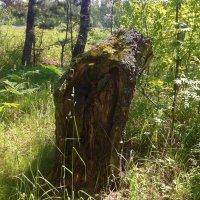 лесной памятник :: Владимир