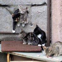 Этих котят уже не поймать. Живут на работе под крыльцом. :: zavitok