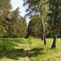 Лето. :: Мила Бовкун
