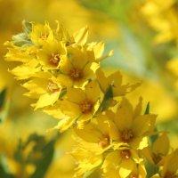 Цвет настроения Жёлтый :: Колибри М