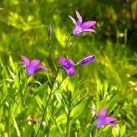 Скромные цветочки :: Светлана
