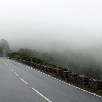 Дорога в туман :: Ольга
