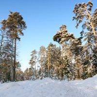 Из зимнего :: Genych Bartkus