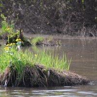 На маленьком островке своя жизнь... :: Татьяна Аистова