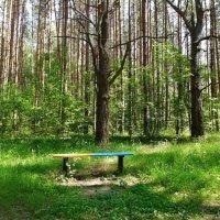 в парке :: Владимир