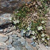 И на камнях растут цветы :: Galina Solovova