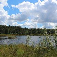 Лесное озеро :: Григорий охотник
