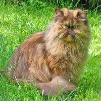 Моя кошка :: Ольга Довженко