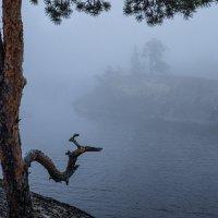Три гудка в тумане. :: Сергей Мартьяхин