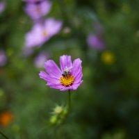 цветы у дома :: Leyla Rustamova