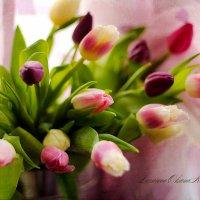 Весенний праздник. :: Лазарева Оксана